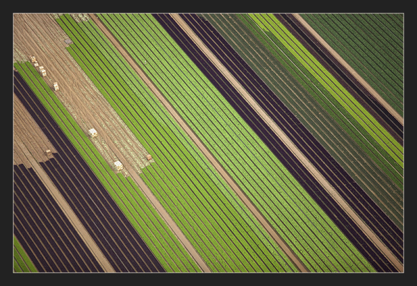 Aerial picture over salad plantation, France