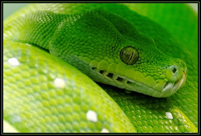Snake Eyes Animal amp Insect Photos TripleRPhotography 800x540 Jpeg