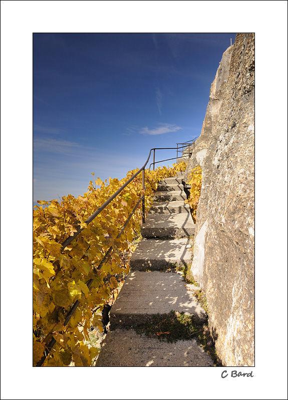 lavaux suisse vignoble vineyards switzerland