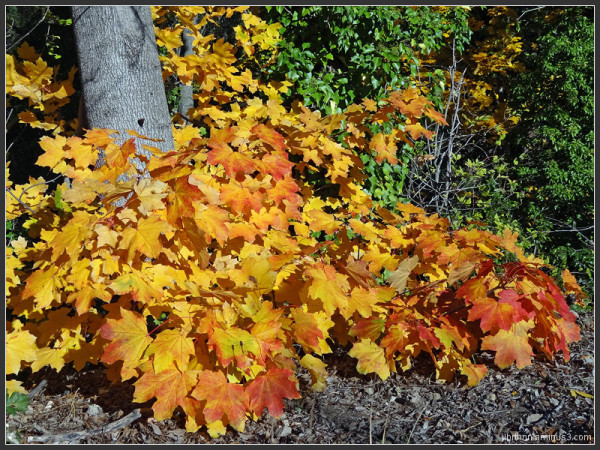 L'automne dans la vallée de la Lergue