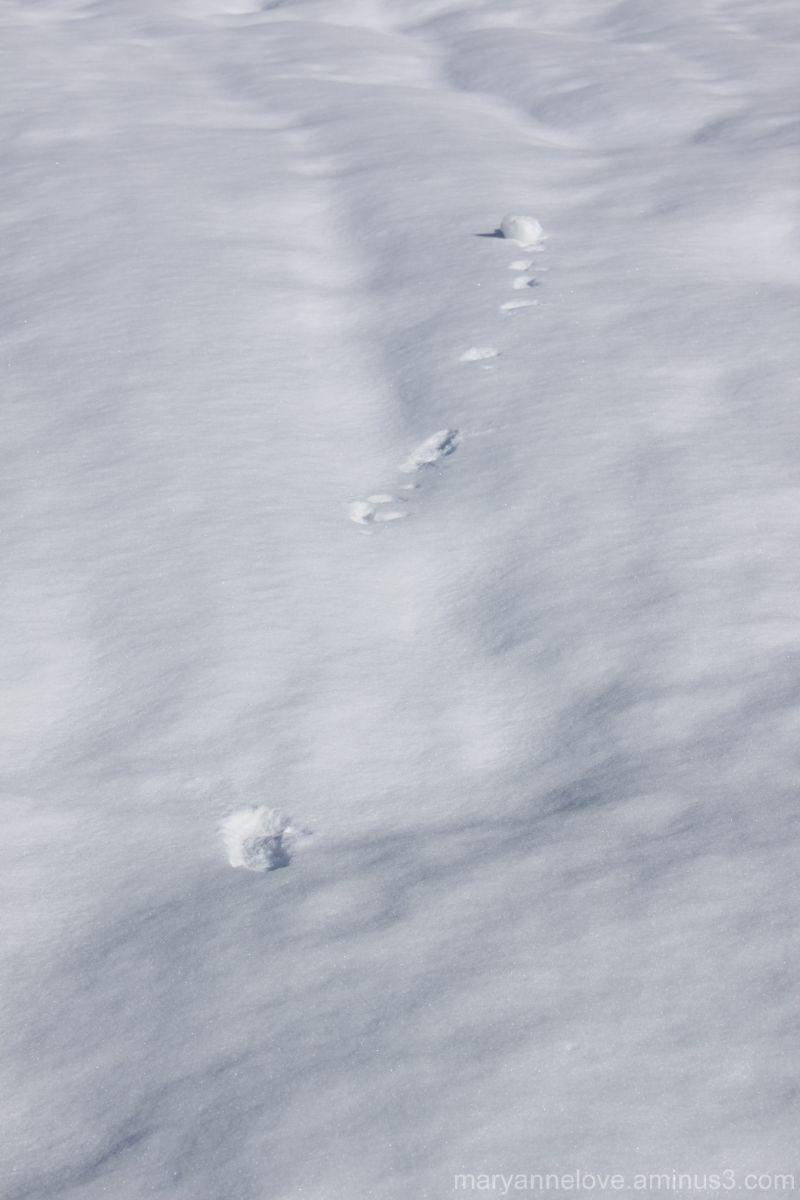 Rolling Snow