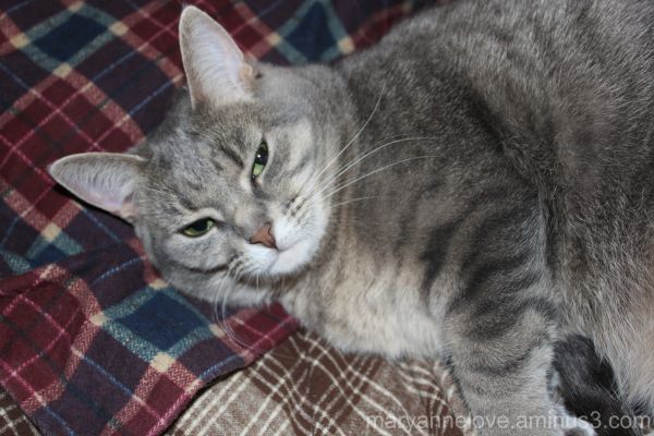 """My cat, Halle, giving me """"the look."""""""
