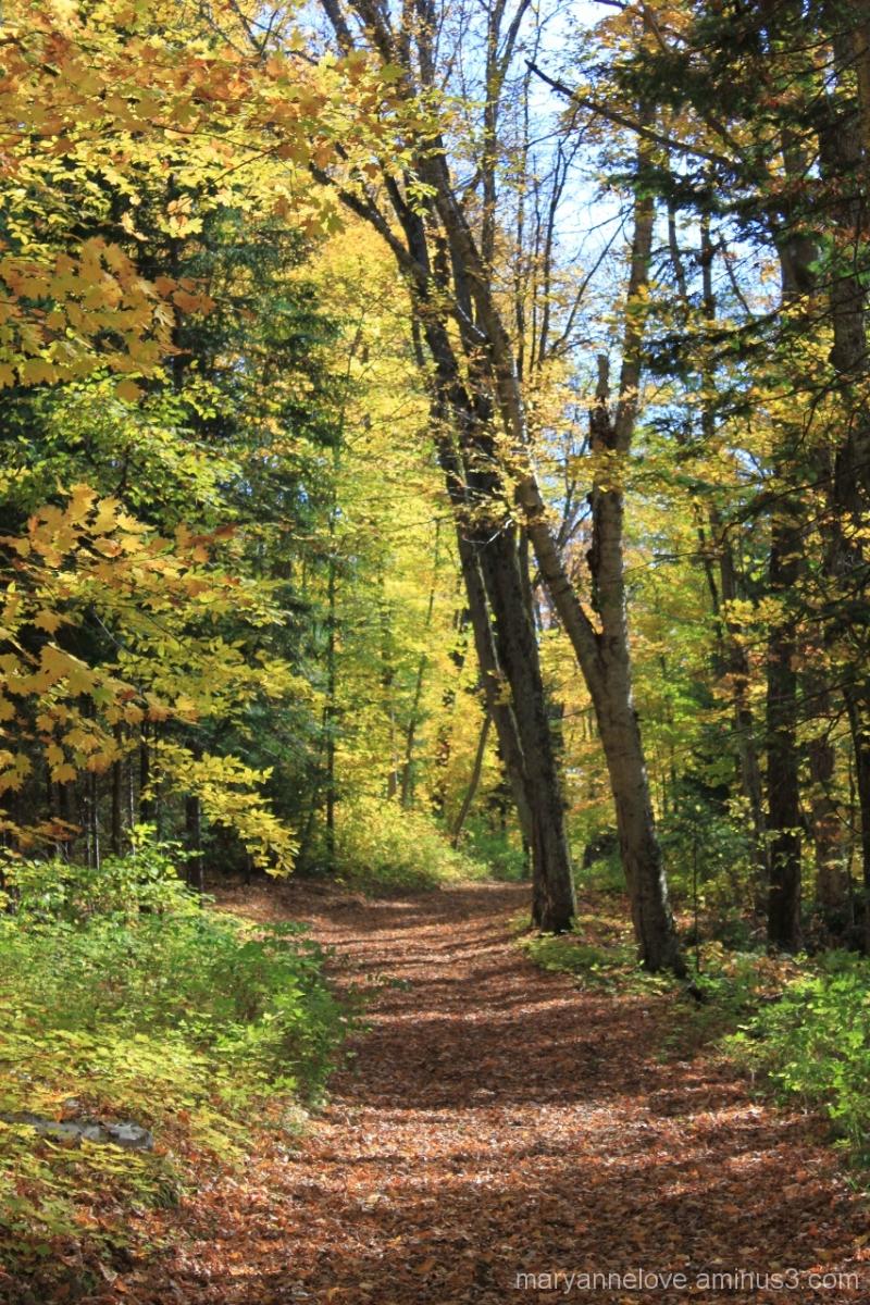 Leaf Road