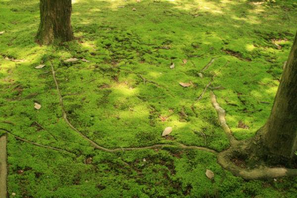 Moss garden, Kyoto