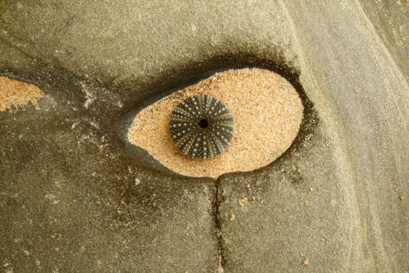 the urchin's eye
