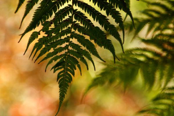 tree fern, autumn