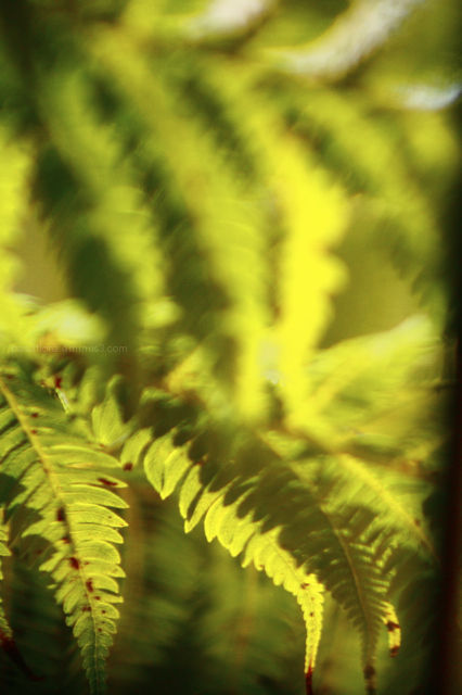 ferns through old glass