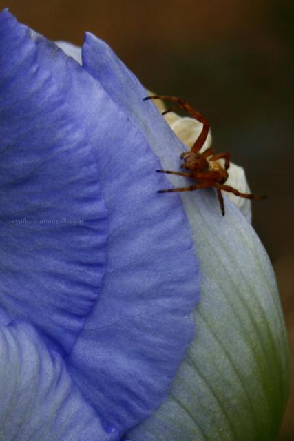 on the iris