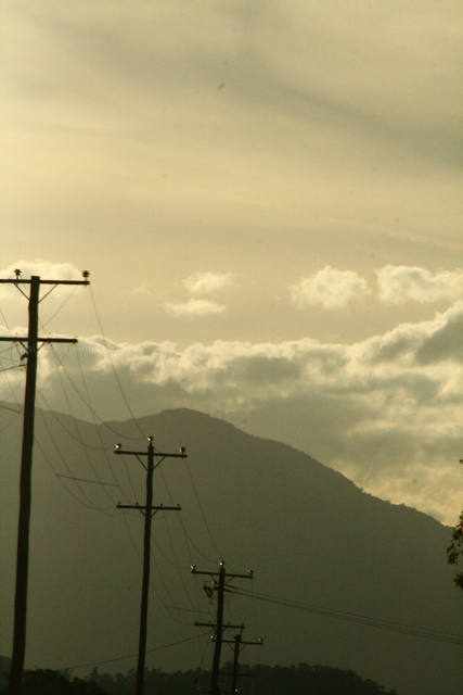 powerlines and cane