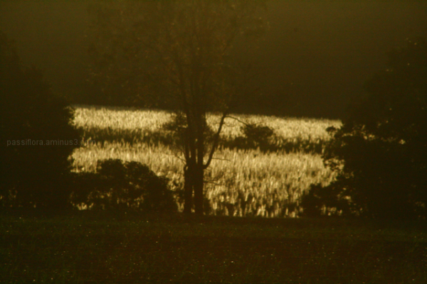 canefields 3