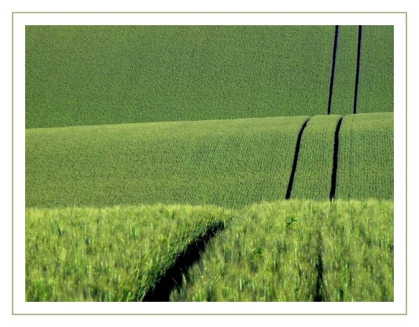 green rolling-hills