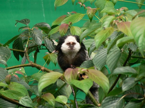 cute monkey looking at me