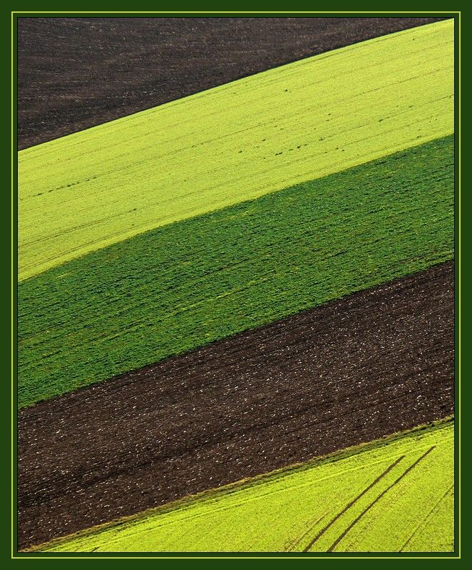 geometry with fields