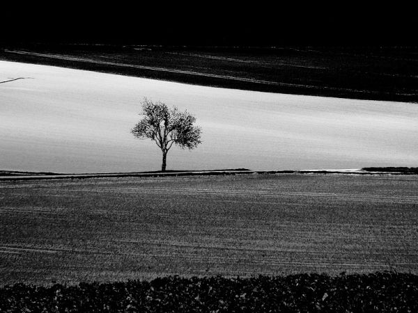 lonely tree in the fields of champagne ardenne