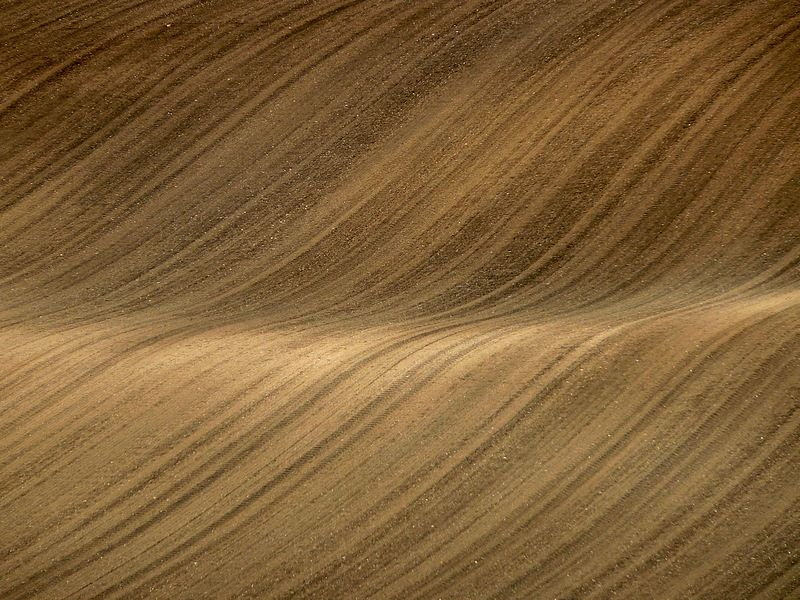 wooden texture of a field