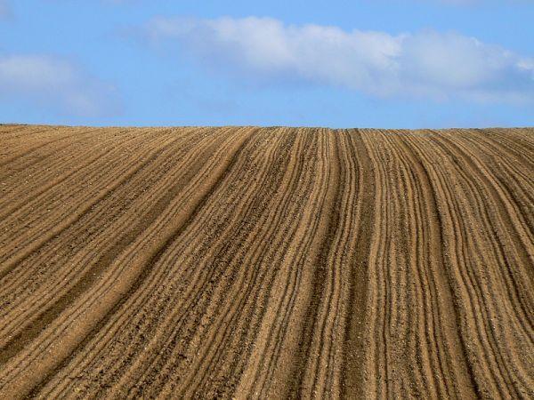 intense brown field