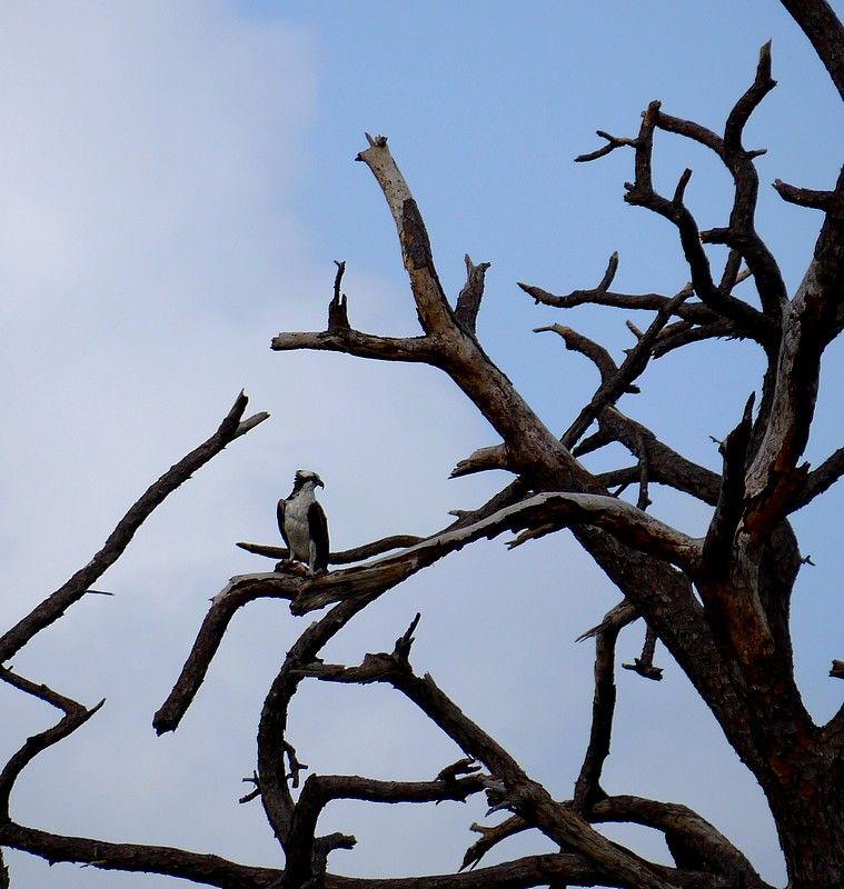 on the dead tree