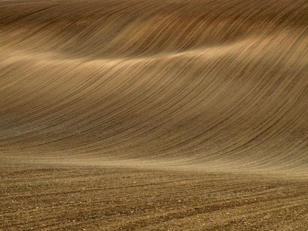 curvy brown field