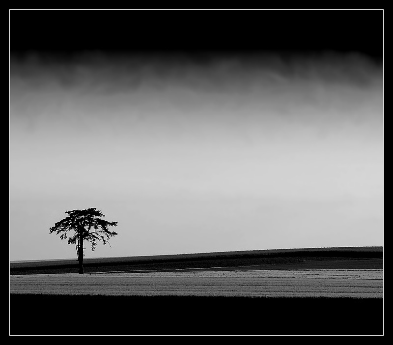 lonely tree and contrasts