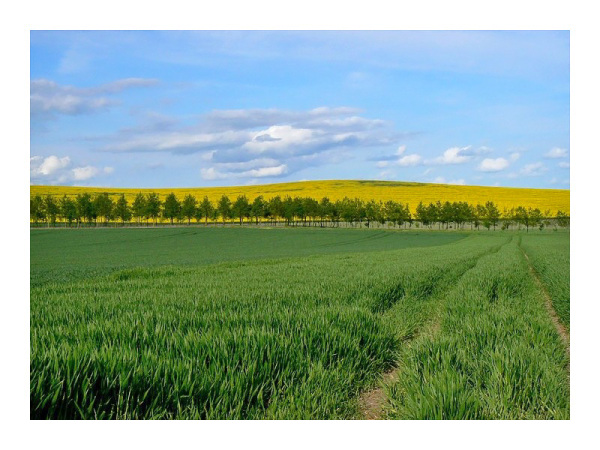 still the fields