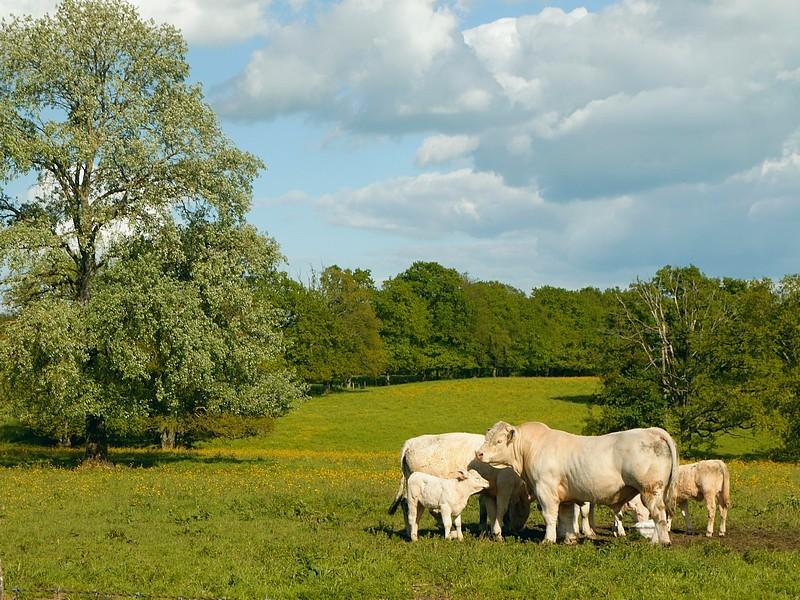 La loge aux chèvres 1