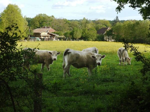 La loge aux chèvres 4