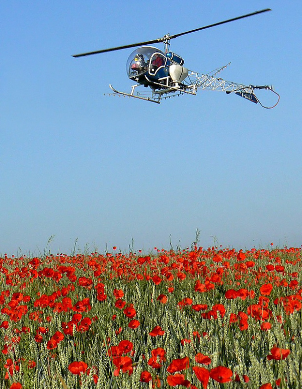 flying over poppies