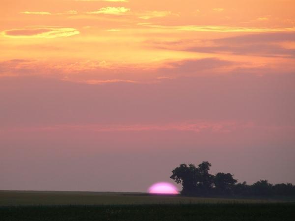 pink sun 3