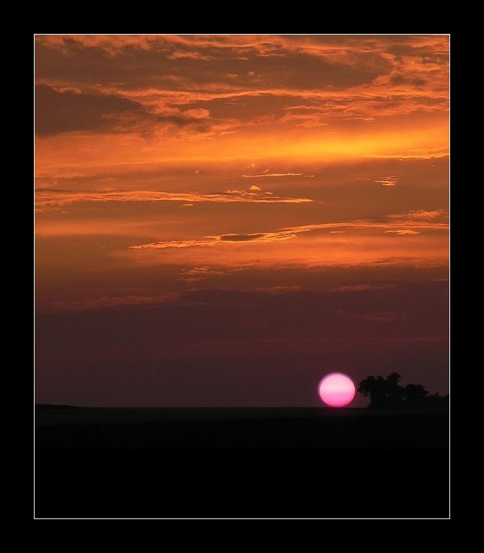 pink sun 4