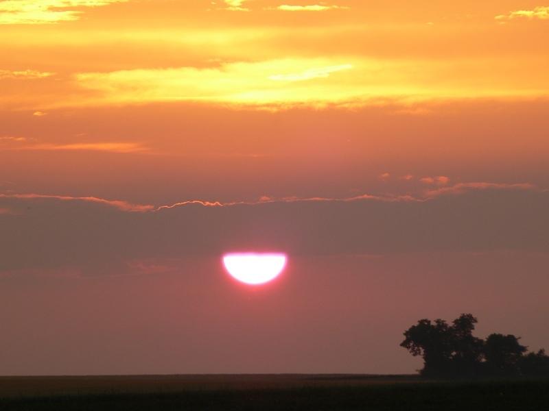 pink sun 5