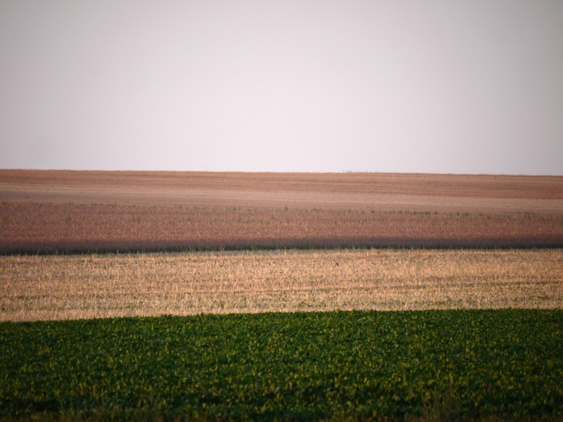 field texture