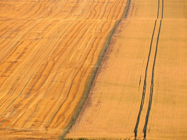 two field textures: before and after the harvest