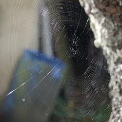 web in the backyard