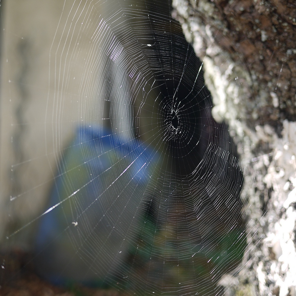web in the backyard