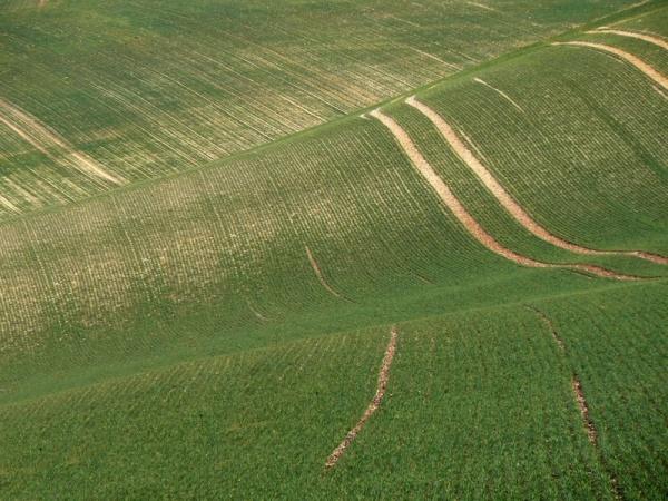 fields texture