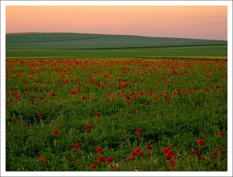 sunset and poppies