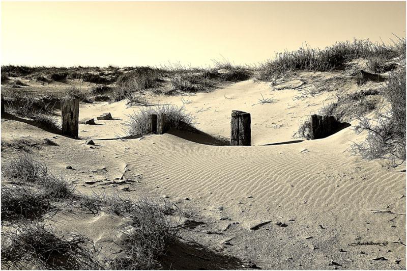 Dans les dunes ...