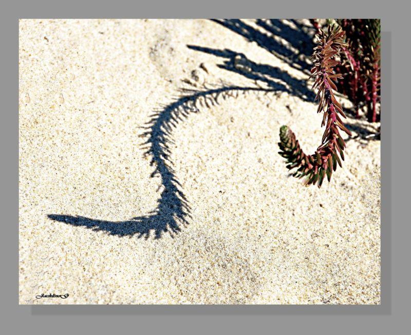 Fleur de sable ....