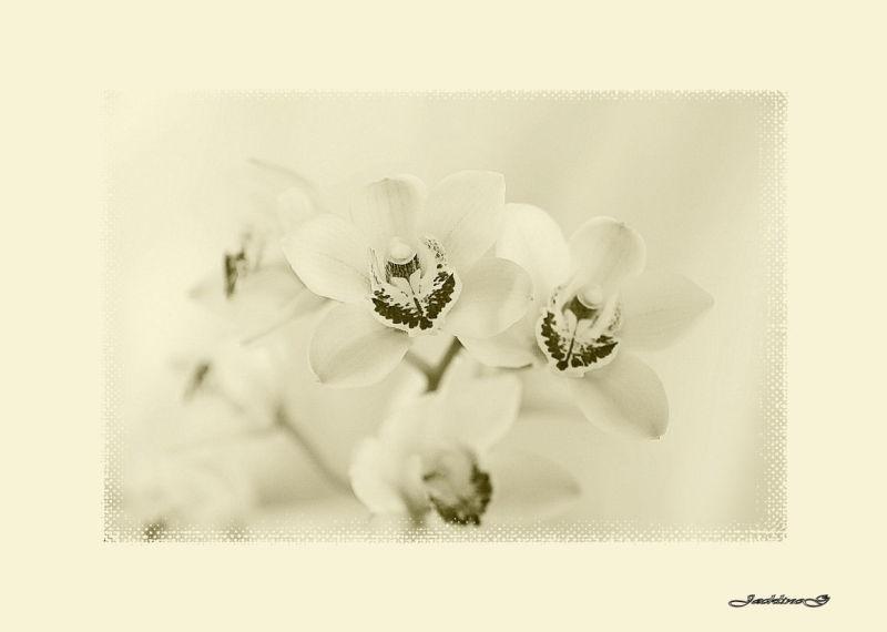 L'Orchidée ...