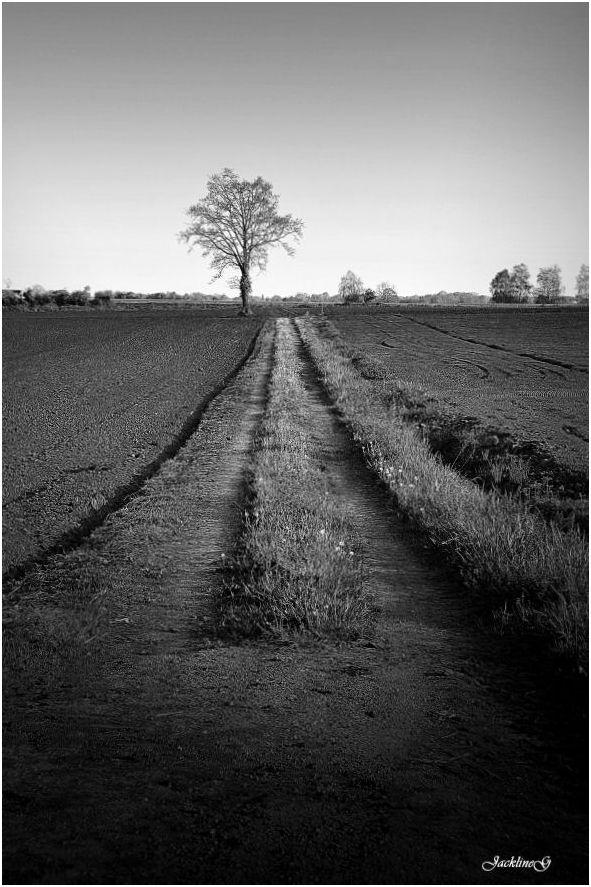 L'arbre au bout du chemin ...