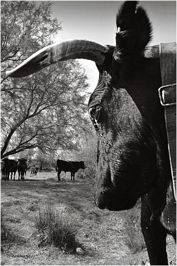 La gardienne du troupeau ...