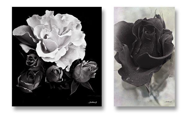 Black & White ...