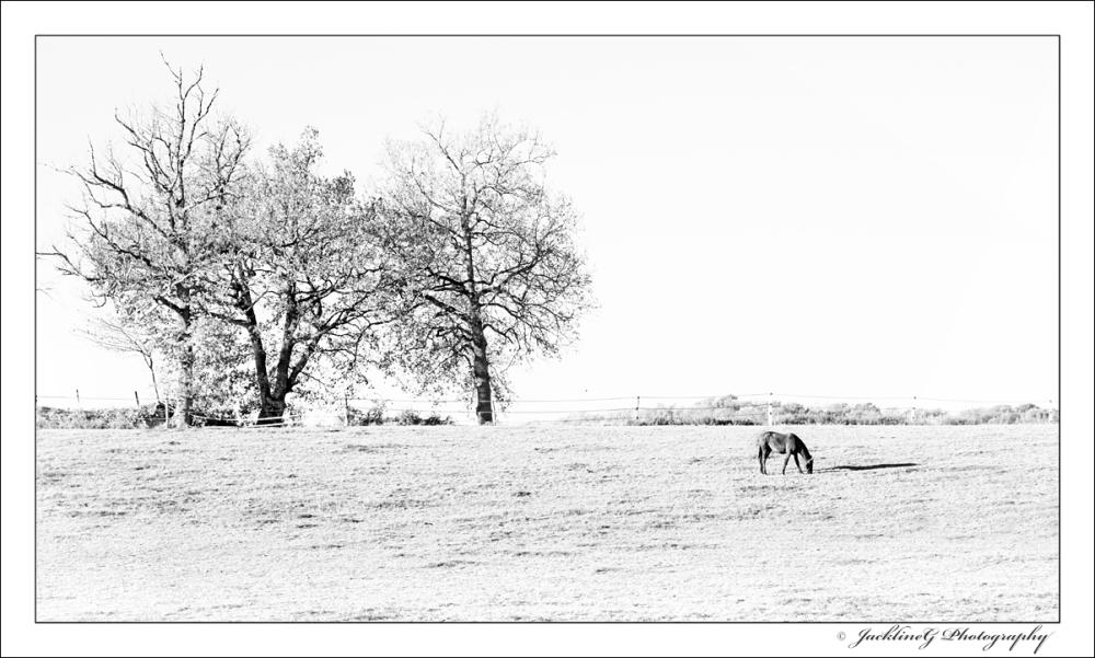 Même en hiver le bonheur est dans le pré ...