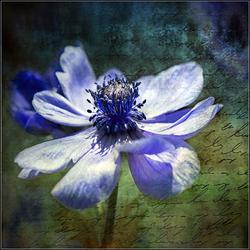 Les fleurs ont la parole ...