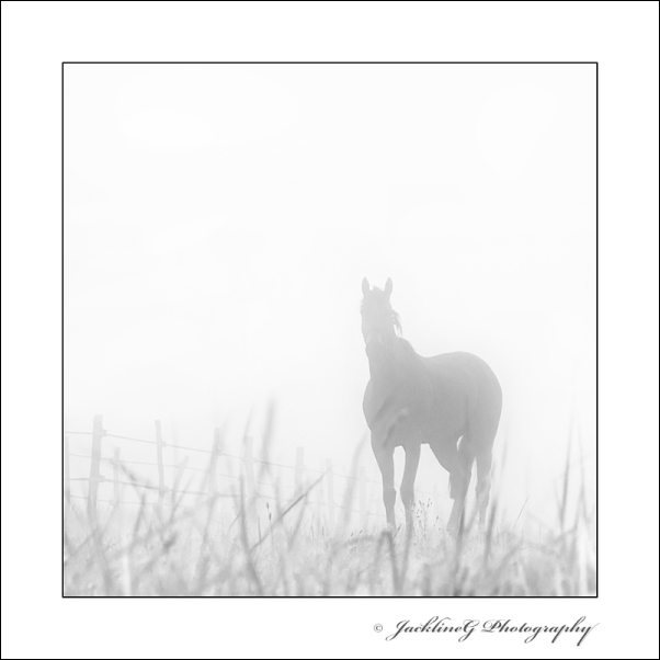 Dans la brume ...
