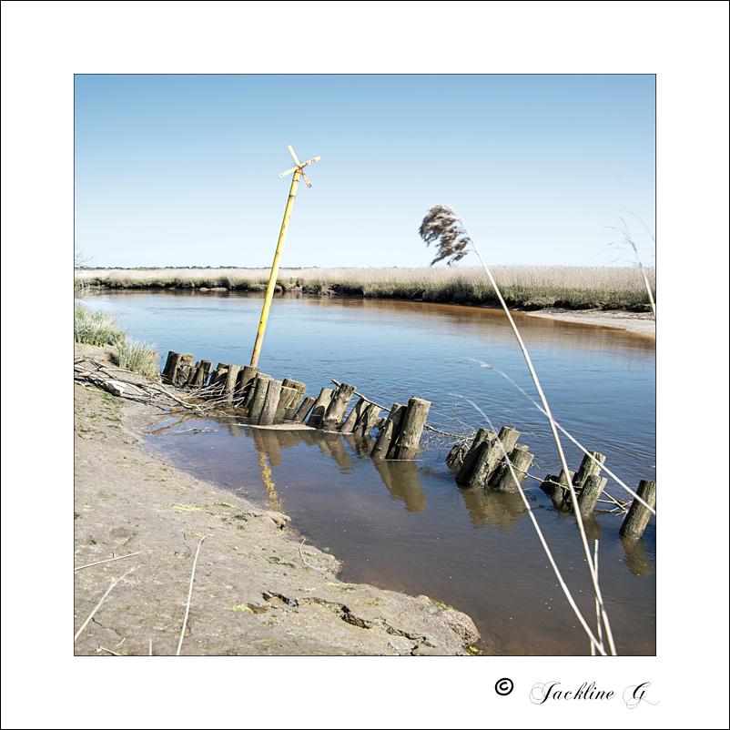 Dans les marais de l'Eyre du Teich (33)