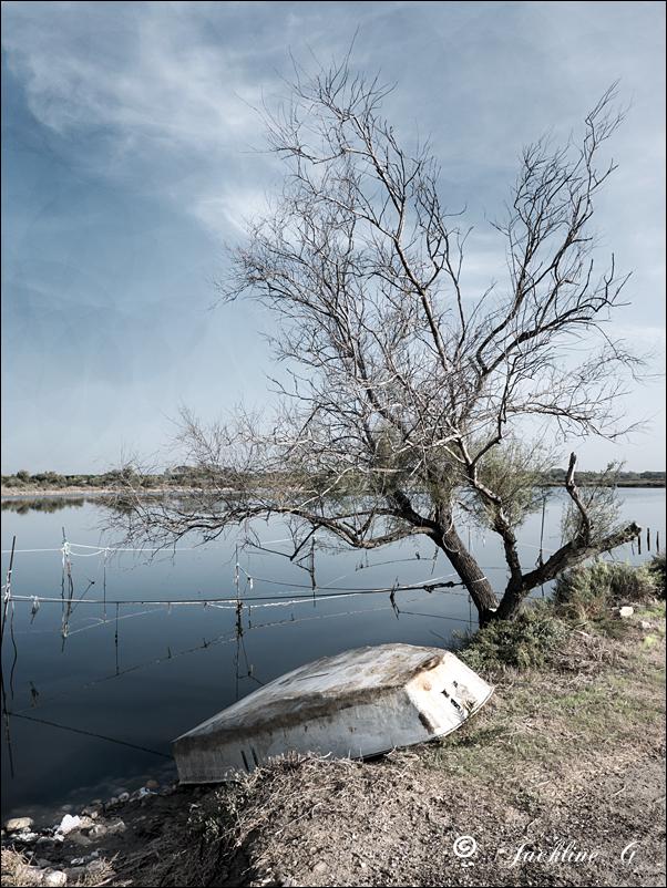 Au bord de l'étang ...