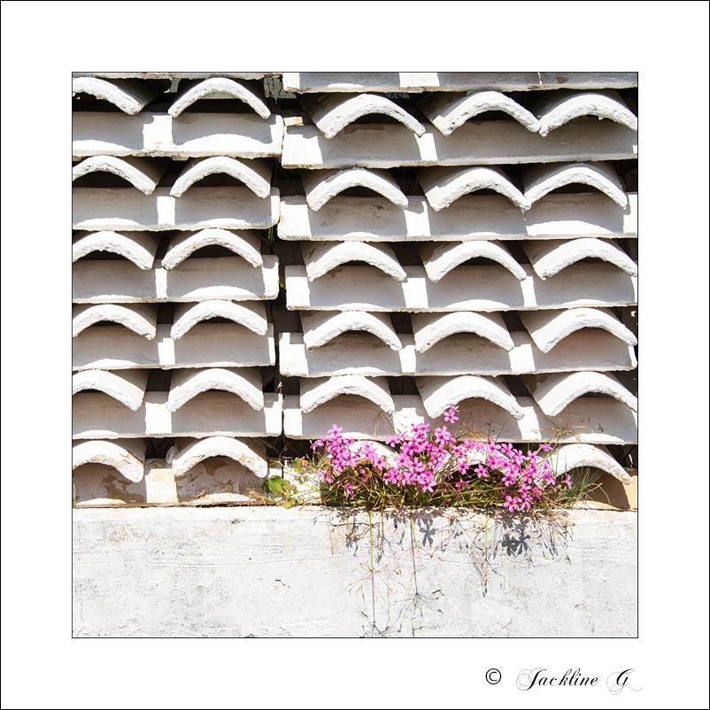 Les fleurs des HLM ...