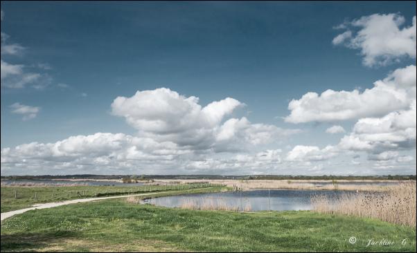 L'immensité des marais (pôle nature de Vitrezay)