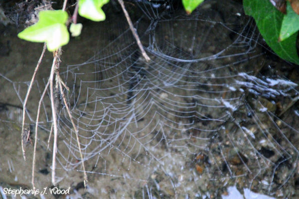 Oh what a tangled web we weave....
